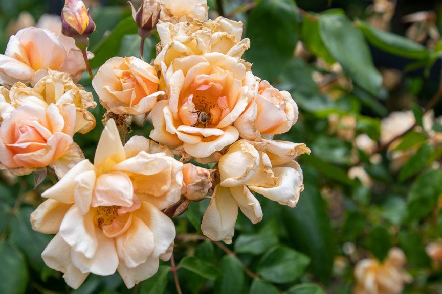 Bendigo Botanical Gardens