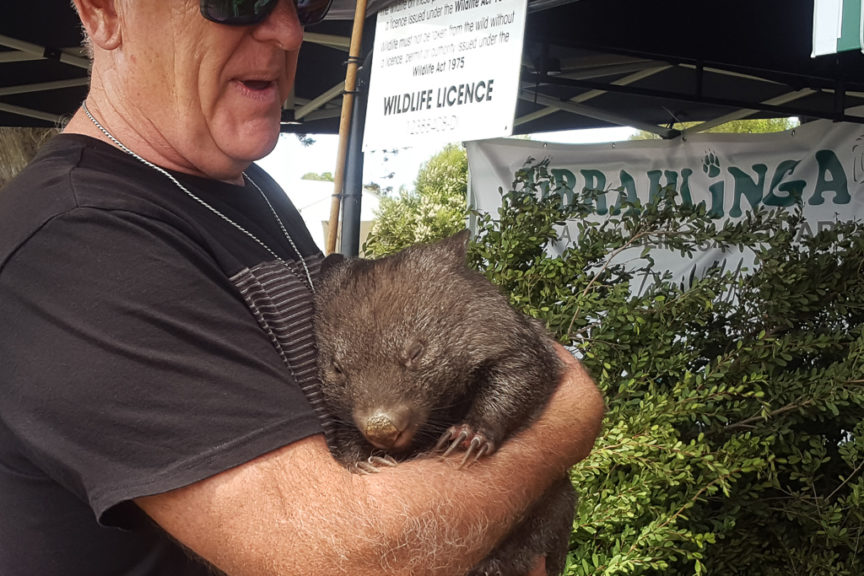 Friendly Wombat